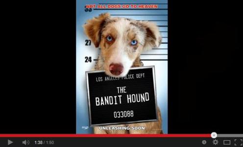 Bandit Hound